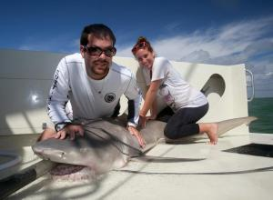 Working to restrain a lemon shark in the Everglades prior to measurement and sampling