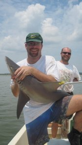 A juvenile sandbar shark in Charleston harbor